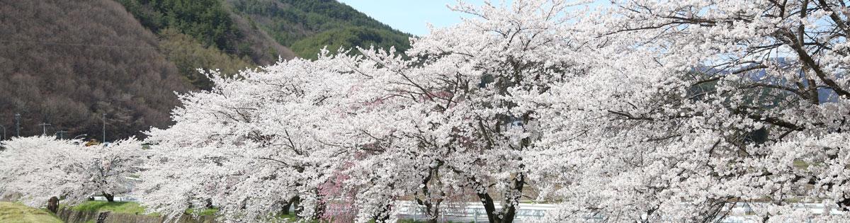 Isuzu River Sakura
