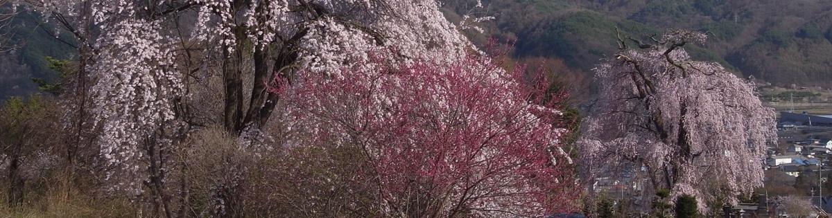 TOP_ 쿠보 桜全景